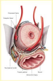 Nervos periprostaticos